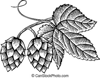 vettore, foglie, vendemmia, icona, (hand, disegnato, luppoli, inciso, style), illustrazione