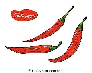 vettore, fondo., bianco, illustrazione, pepe peperoncino ...
