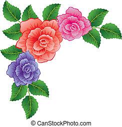 vettore, fondo, di, colorito, rose, con, foglie