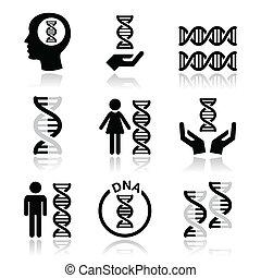 vettore, genetica, dna, umano, icone