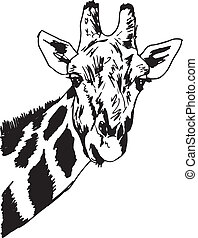 vettore, head., schizzo, giraffa, illustrazione