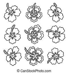 vettore, ibisco, fiore, contorno, icone