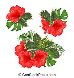 vettore, ibisco, fiori, tropicale, rosso, illustrazione