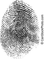 vettore, illustrazione, impronta digitale