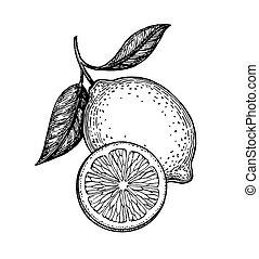 vettore, limone, illustrazione