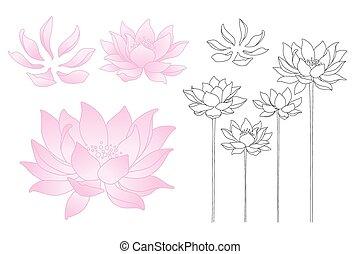 vettore, loto, fiori, e, petali