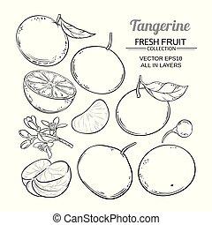 vettore, mandarino, frutta