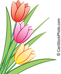 vettore, mazzo, tulips