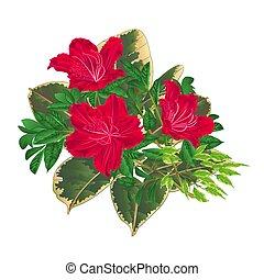 vettore, mazzolino, rododendro, fiori tropicali, rosso