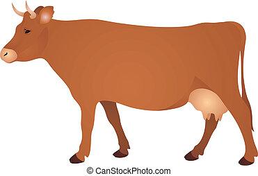 vettore, mucca