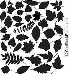 vettore, nero, silhouette, di, foglie