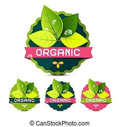 vettore, organico, foglie, etichette, isolato, fondo, bianco