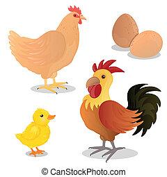 vettore, pulcino, uova, gallina, gallo
