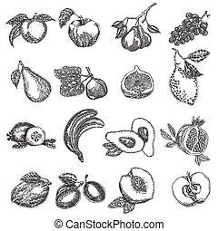 vettore, schizzo, set, illustration., stile, mano, frutta, disegnato, fruits.