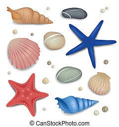 vettore, seashells, starfishes, e, ciottoli