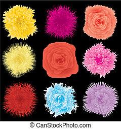 vettore, set, illustrazione, parte, disegno, fiore, elemento, 1