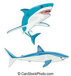 vettore, shark., illustrazione
