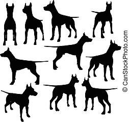 vettore, silhouette, cane, collezione