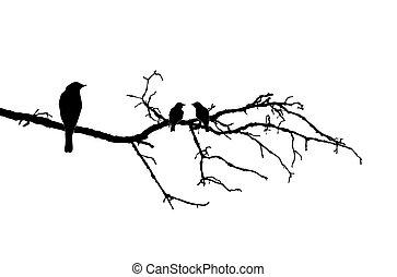 vettore, silhouette, di, il, uccelli, su, ramo