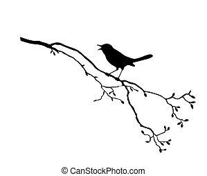vettore, silhouette, di, il, uccello, su, ramo, albero