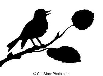 vettore, silhouette, di, il, uccello, su, ramo