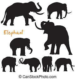 vettore, silhouette, elefante