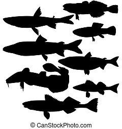 vettore, silhouette, fish