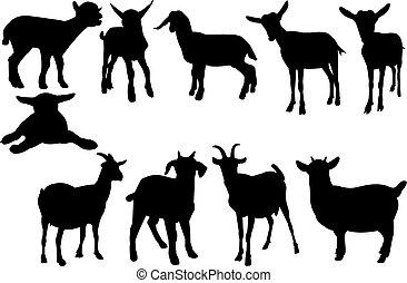vettore, silhouette, goat, illustrazione