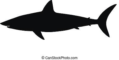 vettore, silhouette, shark.