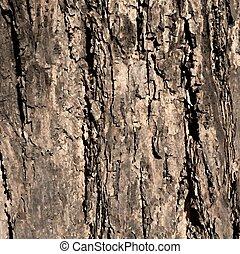 vettore, tessuto legno