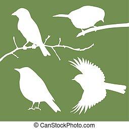 vettore, uccelli, collezione