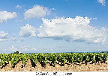 viña, borgoña, pouilly-fuisse, francia