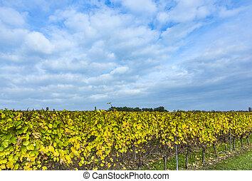 viña, con, permisos amarillos, debajo, cielo azul