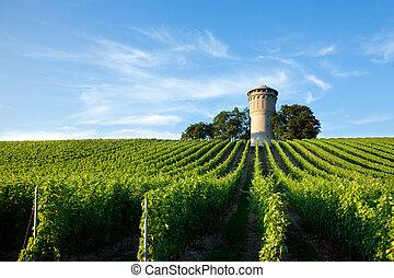 viña, exuberante, verde, hermoso