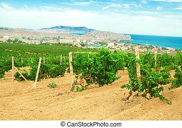 viña, montañas, costa, paisaje