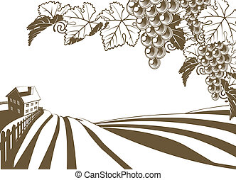 viña, vid, granja, illustratio