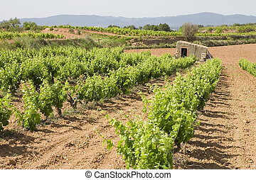 viñas, cataluña