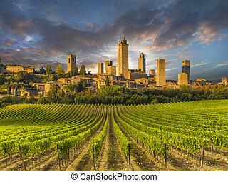 viñas, de, toscana, italia