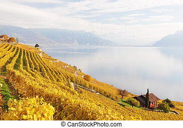 viñas, en, lavaux, región, suiza