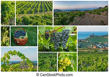 viñas, y, uvas