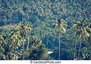 viagem, férias, fundo, -, ilha tropical, com, recursos, -, phi-