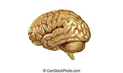 viaggio, in, cervello umano, con, neuro