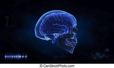 viaggio, in, cervello umano