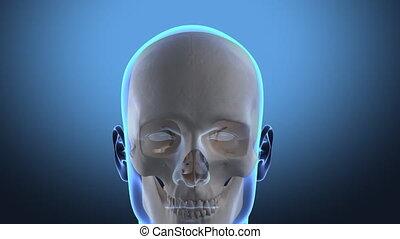 viaggio, in, testa umana