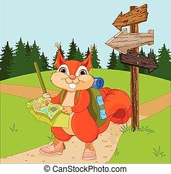 viajante, rota, esquilo, segue