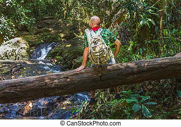 viajero, mochila, registro, selva