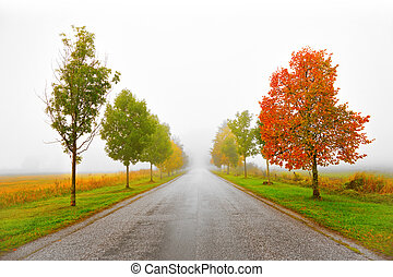 viale, in, autunno