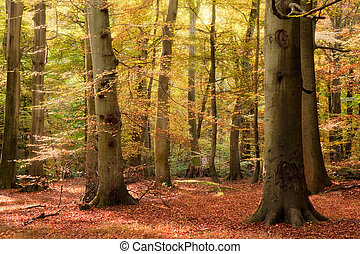 Vibrant Autumn Fall forest landscape image - Beautiful ...
