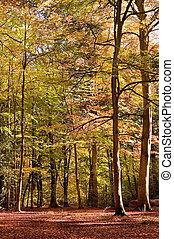 Vibrant Autumn Fall forest landscape image