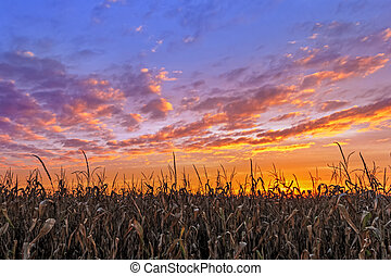 Vibrant Autumn Harvest